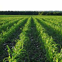 Agriculture & Farm